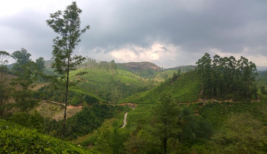 Tea states of Munnar