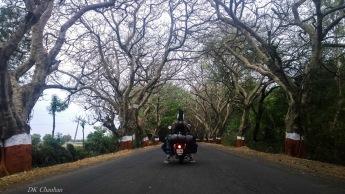gir forest area
