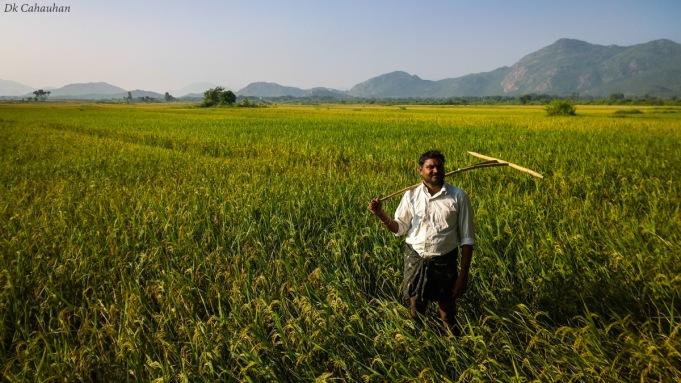 people of odisha