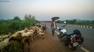 Life on highway at odisha
