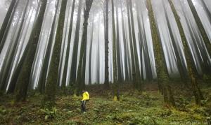 forest of darjeeling west bengal