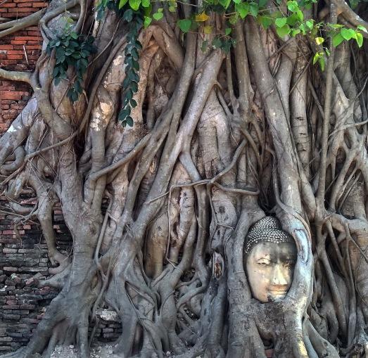 Buddha head embedded in a Banyan tree Ayutthaya, Thailand